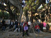 Itinerari dei Ficus della Baia di Moreton, Villa Zirio, Sanremo