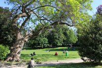 L'alber de Milan - La catalpa monumentale del Giardino della Guastalla