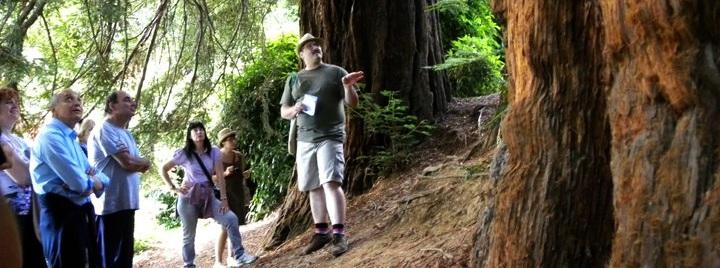 Passeggiata per cercatori di alberi - Parco Burcina, Pollone