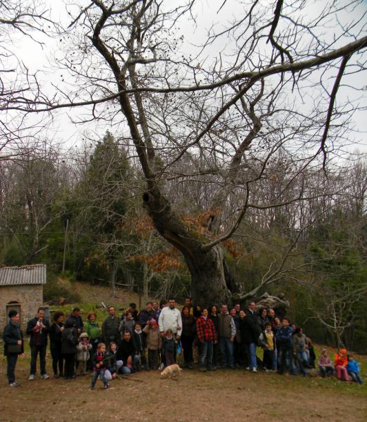 Passeggiata lungo l'itinerario nei boschi di Sassetta, 17 marzo 2012 - Al castagno ultrasecolare detto L'Inginocchiato