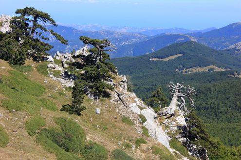 Arborgrammaticus ~ Titolo: La Strega. Luogo: Parco Nazionale del Pollino.