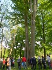 Passeggiata per cercatori di alberi, Parco del Castello di Racconigi (CN)