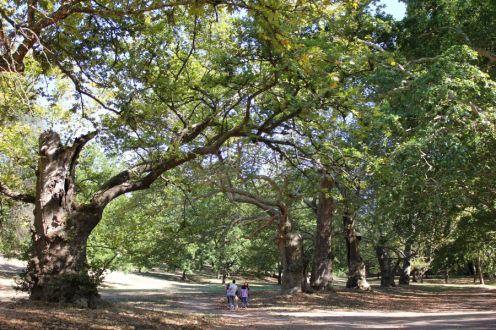 Arborgrammaticus ~ Titolo: L'intrusione. Luogo: Valle dei platani, parco di Villa Borghese, Roma.