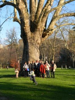 Passeggiata per cercatori di alberi, Parco della Tesoriera, Torino