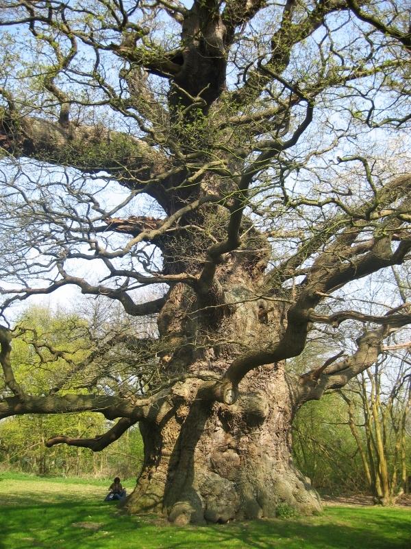 I cercatori di alberi tim bekaert studio homo radix - Alberi bassi da giardino ...
