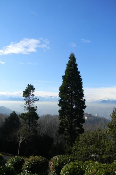 Sequoie d'Italia ~ Sequoia sulla collina di Torino.