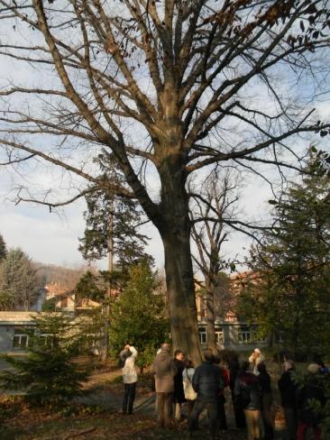 Passeggiata per c ercatori di alberi