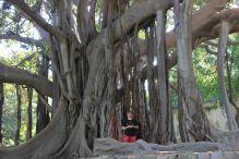 Tiziano Fratus in compagnia del grande Ficus macrophylla dell'Orto Botanico di Palermo