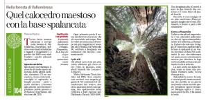 arboretivallombrosa_fratus