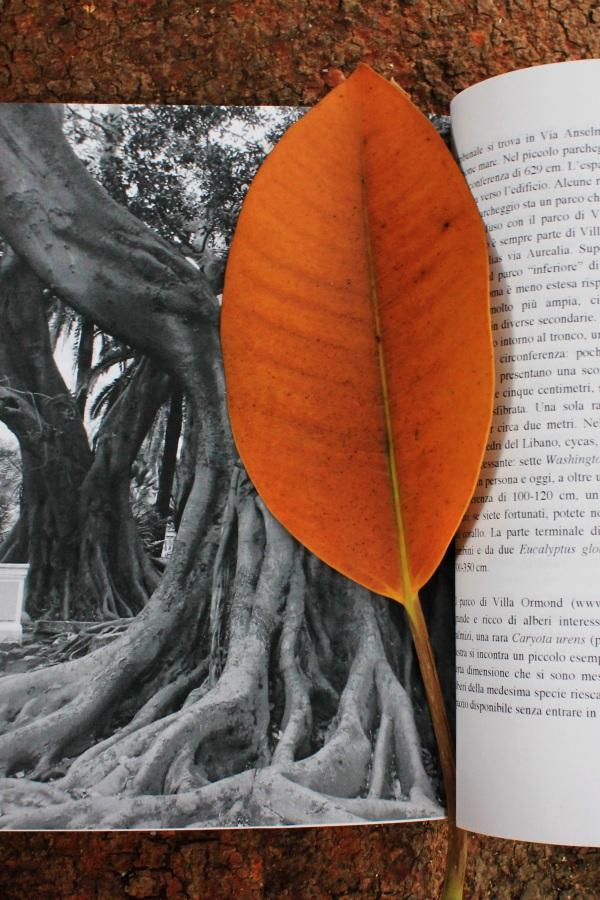 Scatti ai piedi del Ficus monumentale del Museo Bicknell - Tributo ai ficus di Sanremo