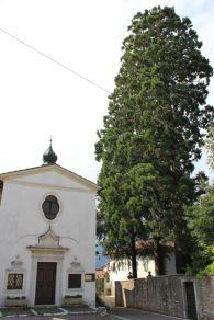 Sequoie d'Italia ~ La sequoia di Gabbiolo, alle porte di Trento.