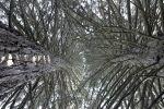 gionadellesequoie_fratus_fennhalscortaccia_2_redux