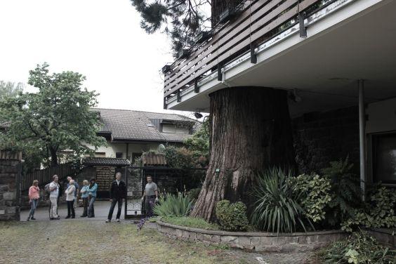 Sequoie d'Italia ~ Il curioso abito di cemento costruito attorno al tronco d'una sequoia al Park Hotel di Merano (BZ).