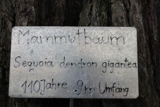 Sequoie d'Italia ~ Ricordo. Il cartello d'una sequoia abbattuta, a Villa Mathilda, Merano.