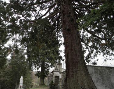 Sequoie d'Italia ~ La coppia di sequoia che riposa all'ingresso del cimitero d Allegrezze, San Stefano d'Aveto (GE).