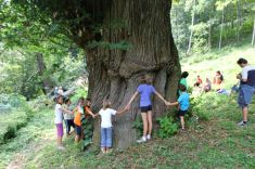 Ci vuole un albero! A Melle, Les MontagnArts 2012 - I bambini intorno al grande tronco