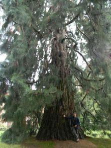 Sequoie d'Italia ~ L'eleganza e la possenza della sequoia di Bee (VB).