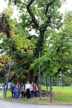 Passeggiata per cercatori di alberi secolari ai Giardini Montanelli di Milano