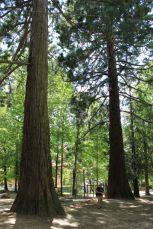 Sequoie d'Italia ~ Il giardino di sequoie di Pavullo nel Frignano (MO).