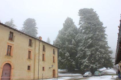 Sequoie d'Italia ~ Le sequoie e l'abete monumentale della Foresta di Lardore, Aprigliano (CS).