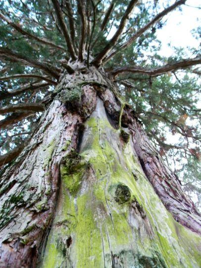 Sequoie d'Italia ~ La ferita causata dall'onda del Vajont, Longarone (BL).