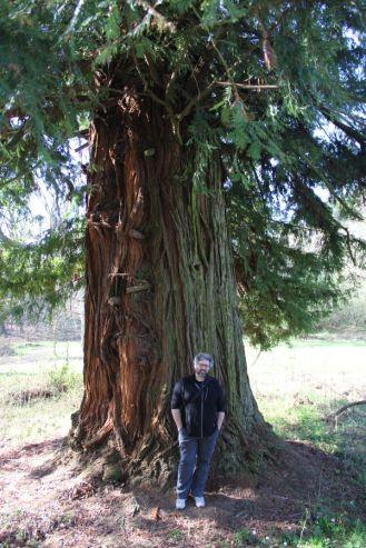 Sequoie d'Italia ~ Sequoia di Chiavazza, Strada del Bottegone, Biella.