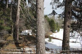 Titolo: Euclide passò di qui. Luogo: Riserva I Giganti di Fallistro, Parco Nazionale della Sila.