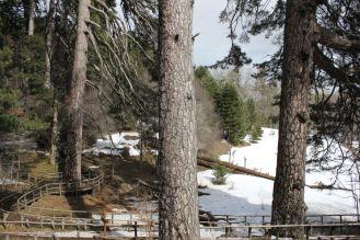 Arborgrammaticus ~ Titolo: Euclide passò di qui. Luogo: Riserva I Giganti di Fallistro, Parco Nazionale della Sila.