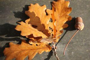 foglie_fratus