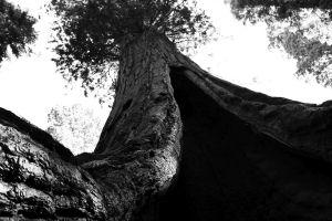 california_fratus_lostgrove_redux