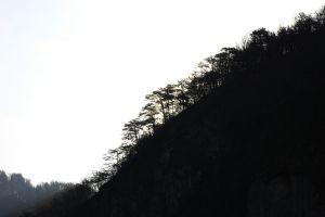 carnia_woods_fratus