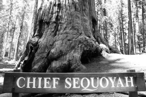 hr_fratus_california_giantforest_chiefsequoyah_redux