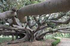 Titolo: Un albero non è mai singolare. Luogo: Parco di Villa Malfitano-Whitaker, Palermo.
