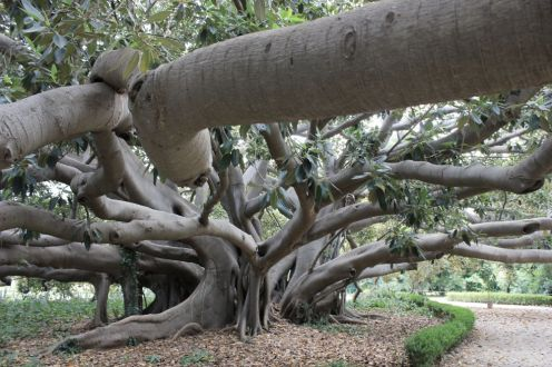 Arborgrammaticus ~ Titolo: Un albero non è mai singolare. Luogo: Parco di Villa Malfitano-Whitaker, Palermo.