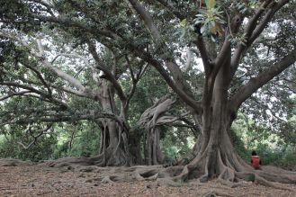 Arborgrammaticus ~ Titolo: Il bacio. Luogo: Parco di Villa Trabia, Palermo.