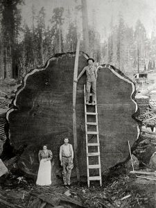 mark-twain-log-kings-canyon-sequoia-national-park_51560_600x450