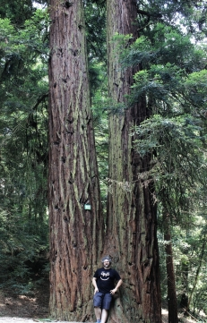 Sequoie d'Italia ~ Homo Radix e Sequoia Gemella, Parco del Castello di Sammezzano, Reggello (FI).