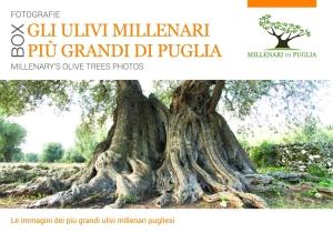 cofanetto_millenaridipuglia
