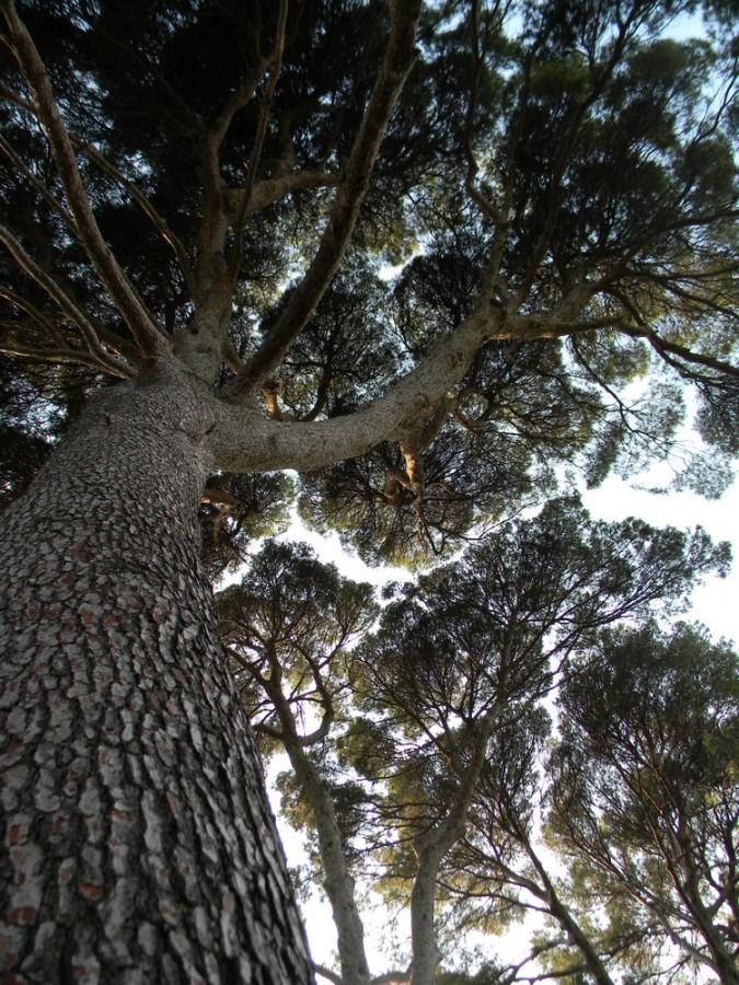 036_Arborgrammaticus-DSCN9883