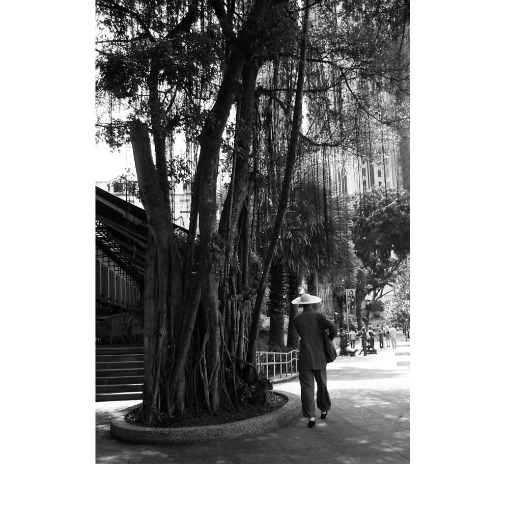 arboribonzo_singapore_fratus_redux