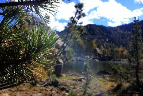 In Valle d'Aosta: acque e fronda di conifere al Mont Avic