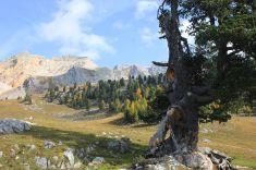 La Foresta di Lesora: spettacoli sulle Dolomiti ampezzane