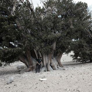 Il cercatore di alberi ~ Rubrica sul quotidiano LaStampa