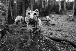 La procreazione del bosco ~ Passeggiate per apprendistidendrosofi