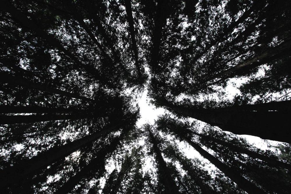 arboretivallombrosa_fratus_black_redux