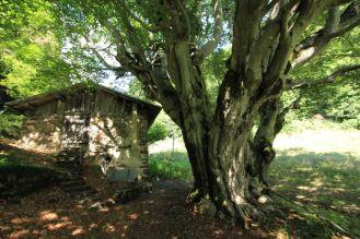 Arborgrammaticus ~ Titolo: Grande Madre del Bosco. Luogo: Sant'Orsola Terme, Val dei Mocheni, Trentino.
