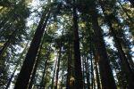 montgomerywoods_fratus_redux