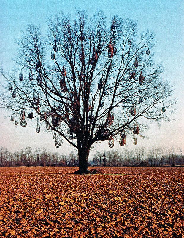 albero01M