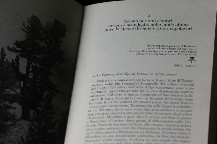 fratus_libroforestescolpite_piove_redux