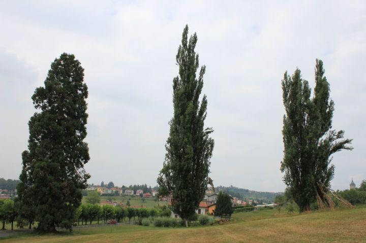 vicoforte_sequoia_fratus_2012_g